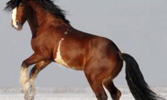 Виникнення і екстер`єр коней породи володимирський ваговоз