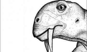 Вперше виявлений шаблезубий вегетаріанець