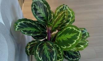 Шкідники і хвороби кімнатних рослин