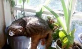 Шкідливі звички кішок