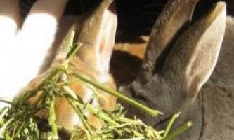 Всі хвороби кроликів