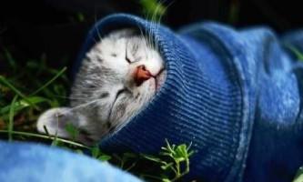 Все про застуді у кішок - симптоми, лікування і профілактика