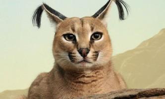 Всі сучасні види котячих - таксономія котячих