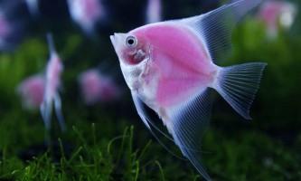 Вибираємо найкрасивіших рибок для акваріума