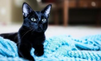 Виділення з матки у кішки