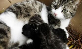 Виділення у кішки після пологів