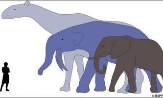 Вимирання динозаврів дозволило ссавцям вирости
