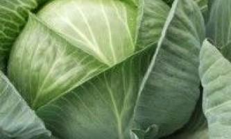 Вирощування капусти в городі