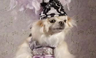 Висока мода для собак (dog vogue)