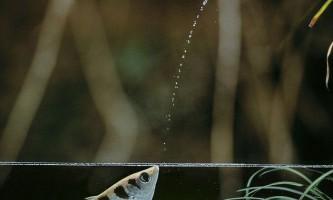 Високошвидкісна фотографія комах і птахів стивена далтона