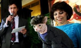 Виставка кішок algonquin cat fashion show 2010
