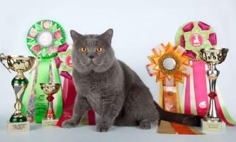 Виставки кішок: для кого вони проводяться і навіщо потрібні?