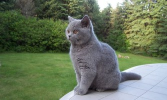 Виведення грудочок шерсті у кішок: трава для кішок і мальт-паста