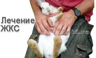 Роздутий живіт у кроликів - шлунково-кишковий стаз