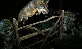 Wildlife photographer 2009