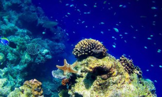 Wwf: чисельність жителів морів і океанів стрімко скорочується, починаючи з 1970 року