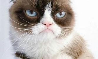 Youtube назвав найпопулярніших котів за весь час існування сервісу