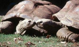 За галапагосскими черепахами тепер можна поспостерігати завдяки google street view