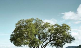 За інстаграмом дерева стежать понад 17 тисяч осіб