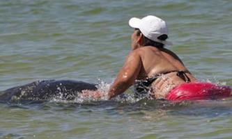 За катання на ламантинів жительці флориди загрожує тюремний термін