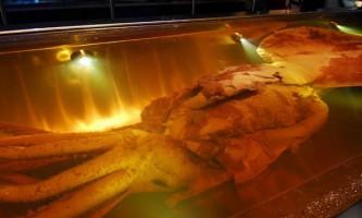 Навіщо гігантським кальмарам гігантські очі?