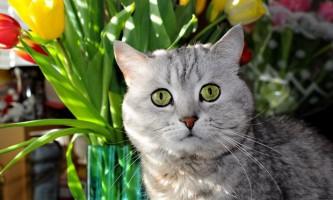 Навіщо кішкам таурин?