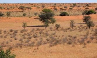 Загадки життя в пустелі калахарі