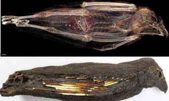 «Закорм до смерті»: навіщо древні єгиптяни проводили дивні ритуали з хижими птахами?