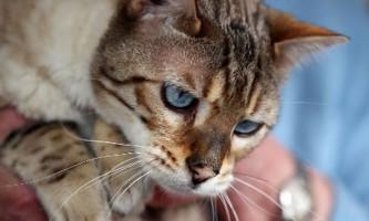 Замурований у ванній кіт сімба прожив майже місяць без їжі і води