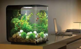 Запуск акваріума з рибками