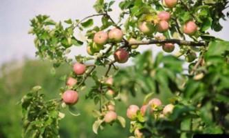 Захист фруктового саду