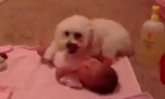 Захистив немовляти цуценя стало зіркою youtube