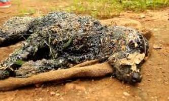 Захисники тварин два дні відмивали собаку від смоли