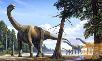 Зауроподів - найбільший динозавр