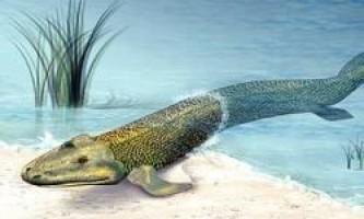 Зябра у древніх риб з`явилися зовсім не для дихання