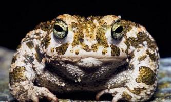 Жаби: фото, опис. Відмінність жаби від жаби.