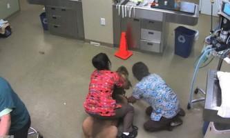 Жінка осідлала собаку, яка не далася ветеринара