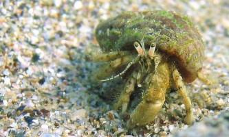 Жертви забруднення: мікропластік виявлений в організмах тисяч глибоководних істот