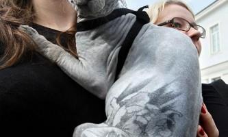 Жорстока мода: тату на домашніх тварин