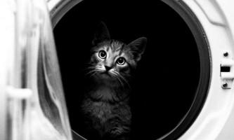Жителі кузбасу вимагають від влади покарати чоловіка вбив в пральній машині кота
