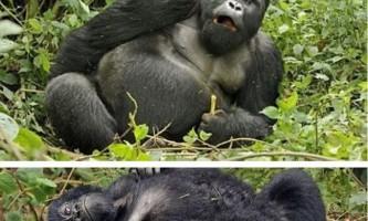 Тварина, яка поводиться, як людина