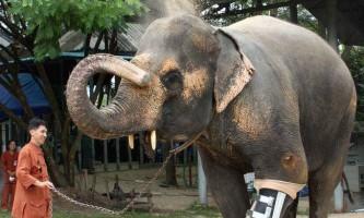 Тварини-інваліди, які вижили завдяки людині