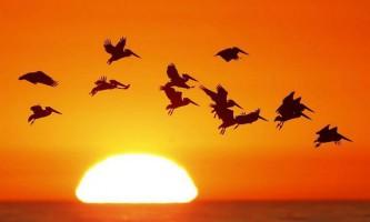 Тварини на тлі сонця: дивовижна природа