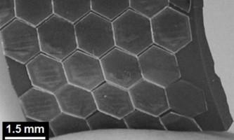Тварини надихнули вчених на створення гнучкої броні