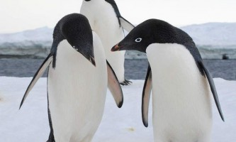 Тваринний світ антарктиди