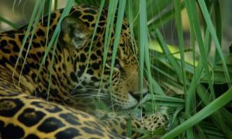 Тваринний світ екваторіального лісу
