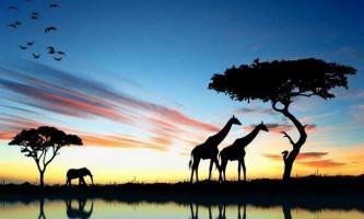Тваринний світ південної америки. Рослини південноамериканського материка