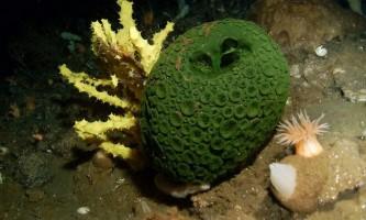 Тваринний світ морів і океанів