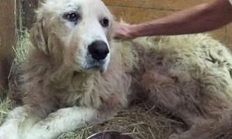 Живу собаку знайшли в руках господарів, які загинули від торнадо
