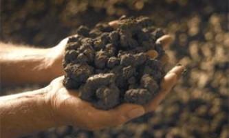 Життя на землі з`явилася з глини